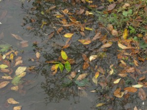 Puddle with autumn leaves in it in Cohoes NY