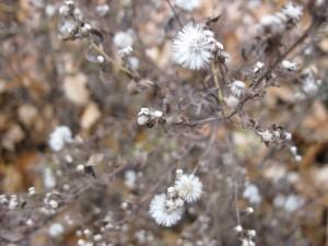 Residual of fall flowers