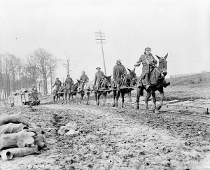 Streight's men plan to use mules exactly like these World War I soldiers are doing.  Source.