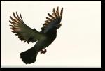 Modern avian dinosaur (Image:  shutter41)
