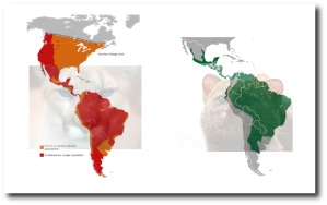 Mountain lion ranges are orange (rare) or red (thriving).  The jaguarundi range is green.  (Wikipedia)