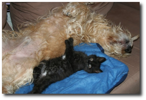 Dogs and cats, sleeping together.  (Image: jinterwas)