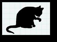 This cat.