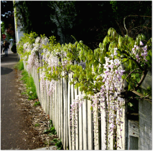flowers and fence small