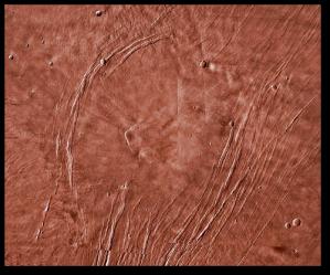 Alba Mons - appearances can be deceiving.  (NASA via Wikipedia)