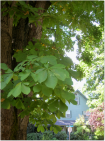 leaves and house small